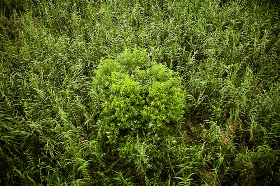 Field in Hanoi, Vietnam