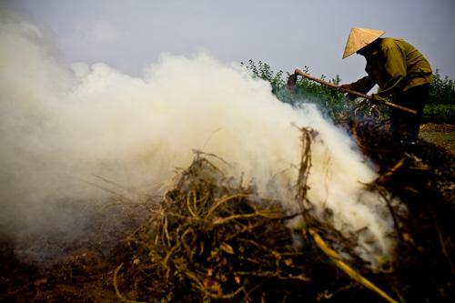 Hanoi Vietnam Farmer