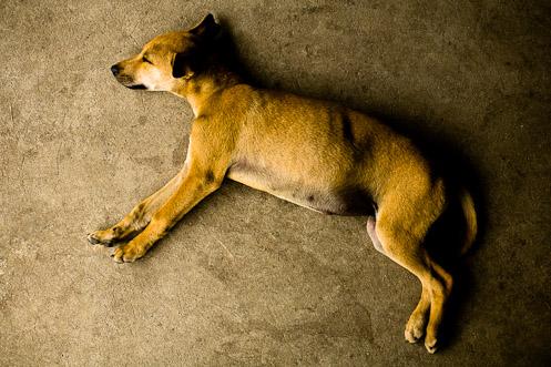 Dog Days Philippines