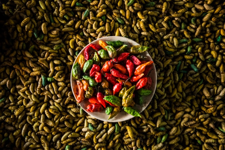 Naga chilis, the world's hottest chili, for sale at the market in Kohima, the capital of Nagaland, India.