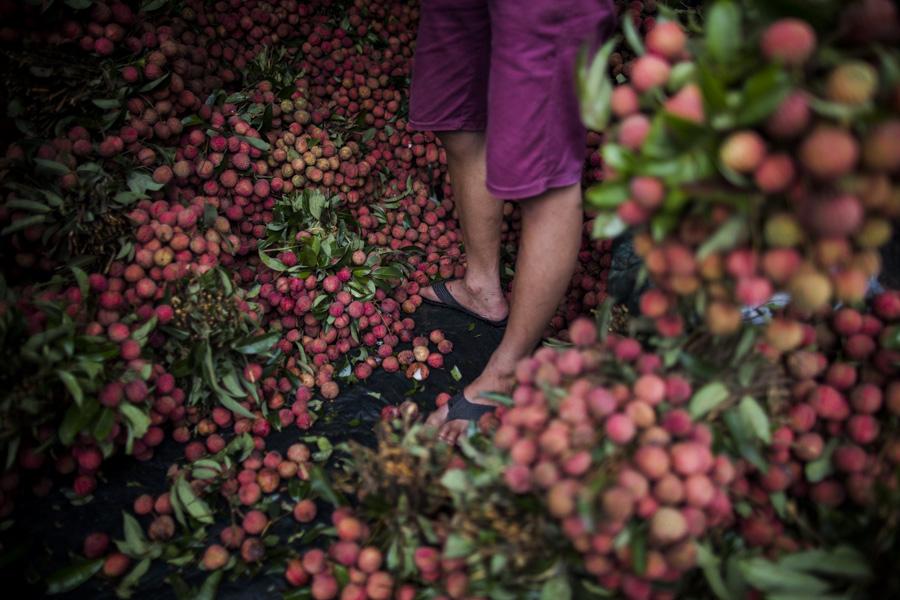 Aaron Joel Santos New York Times Vietnam 03