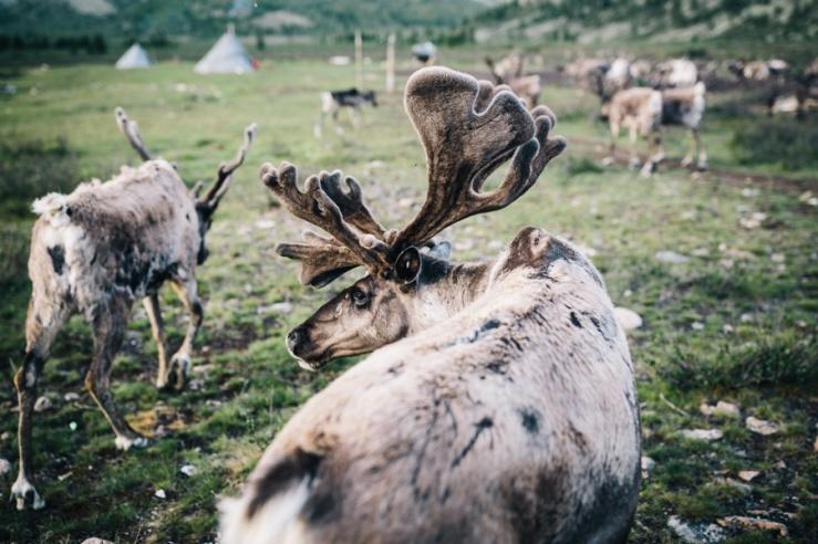 Travel Photography Mongolia 10