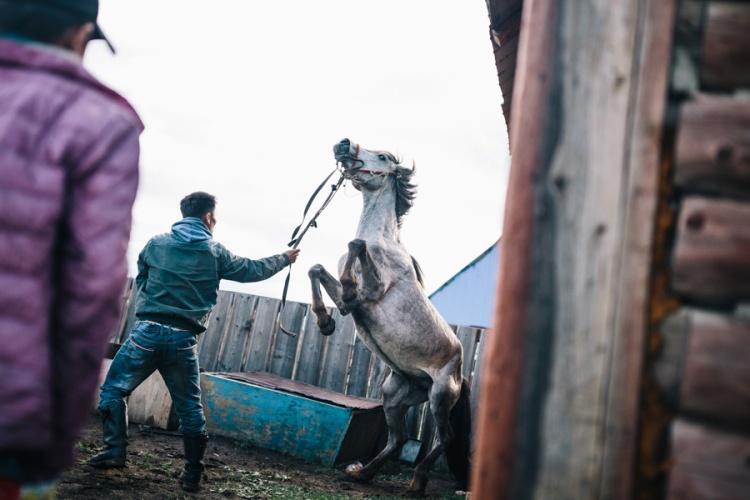 Travel Photography Mongolia 14
