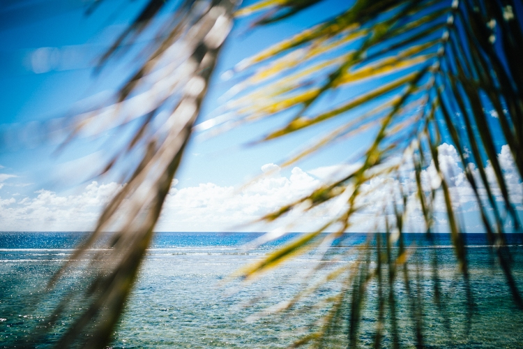 Palm fronds and crystal blue waters on Ritidian beach in northern Guam.